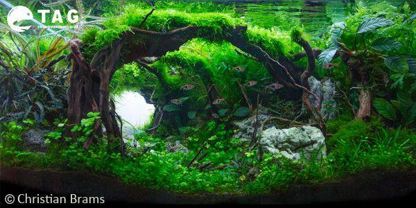 aquascape designchristian brams | nature aquascaping style
