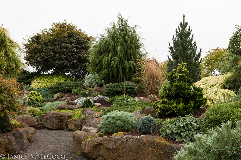 Conifer Garden Ideas 330 best conifers images on pinterest Conifer Gardensbrilliant Year Round Texture And Color