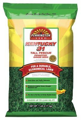 Pennington Seed 100516051 7 lbs Kentucky 31 Tall Fescue Seed * Details can be found by clicking on the image.