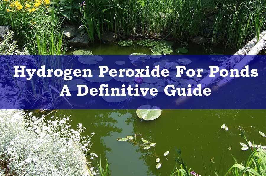 Hydrogen peroxide for pond algae control a definitive