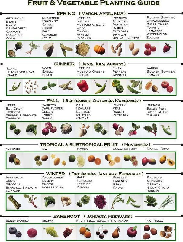 Gardening also planting guide vegetables and herbs in sa summer rainfall area rh pinterest