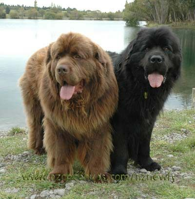 Blacky Browny Check more at Dogs