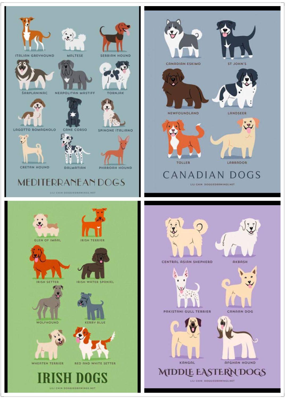 Dog type 2 Dog breeding business, Dog breeds list, Coton