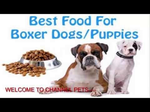 Dog Food Secrets Free Download Dog Food Secrets Reviews