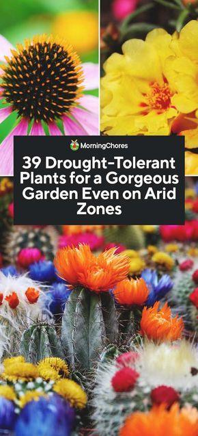 39 Drought-Tolerant Plants for a Gorgeous Garden Even on ...