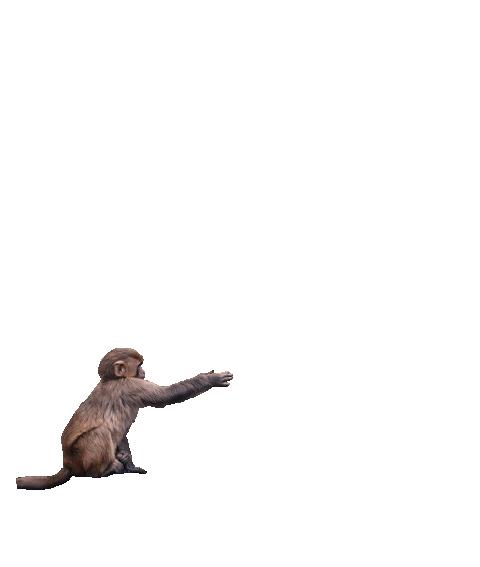 Monkey Png Photo 1263 Cb Editz Free Cb Background Png Download Png Photo Background Wallpaper For Photoshop Photoshop Backgrounds