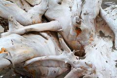 Driftwood tangle Royalty Free Stock Photos