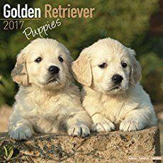 Golden Retriever Names Unique Male Female Ideas Boy Dog Names Unique Golden Retriever Girl Dog Names Unique