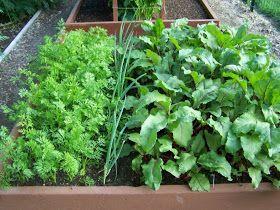 Annie's Kitchen Garden: September 22, 2009: Home Made Seed Mat Tutorial
