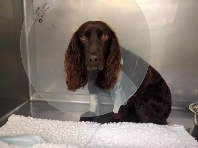 Dog Is Travelling 4 000 Miles To Saves One Of Its Puppies With