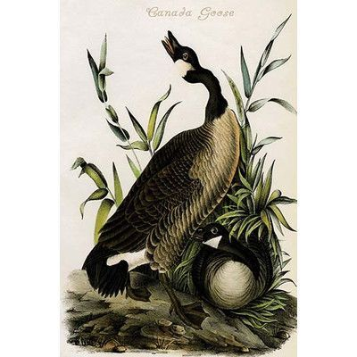 Buyenlarge 'Canada Goose' by John James Audubon Painting Print