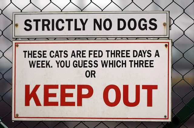 strictly no dogs