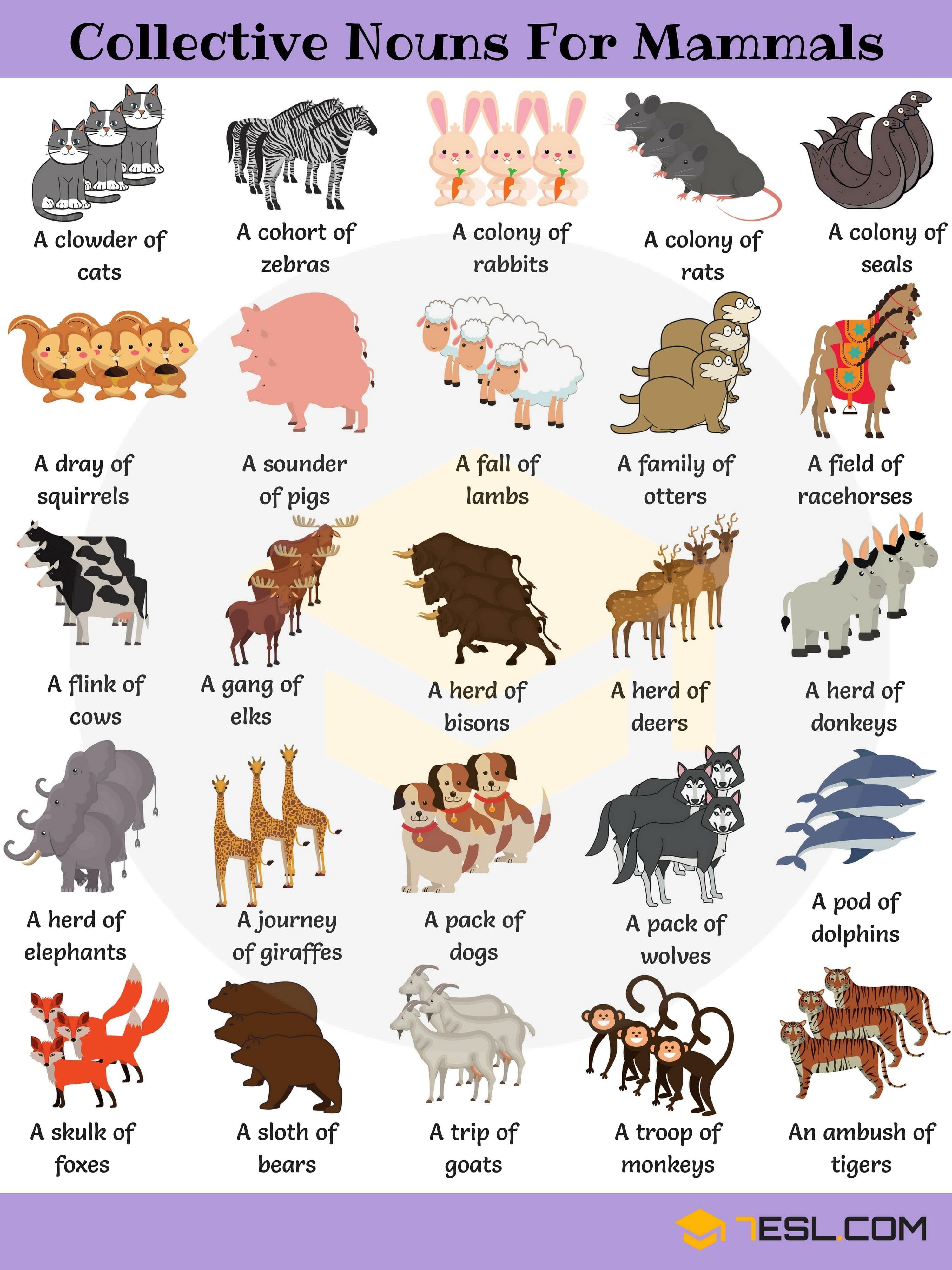 Animal Group Names 250+ Collective Nouns for Animals