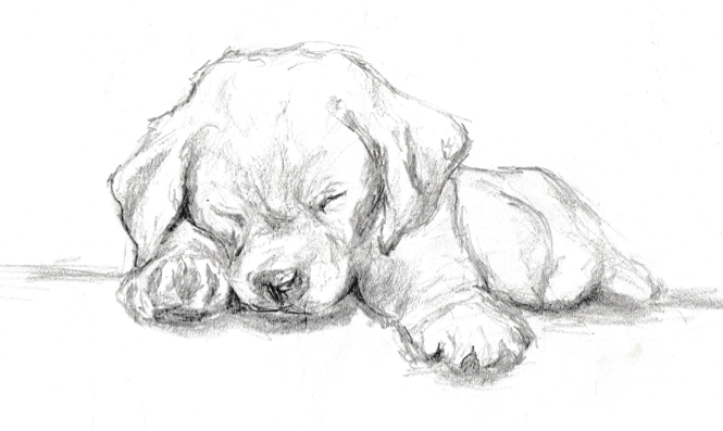 Quick Graphite Sketch Of A Labrador Puppy Labrador In 2018