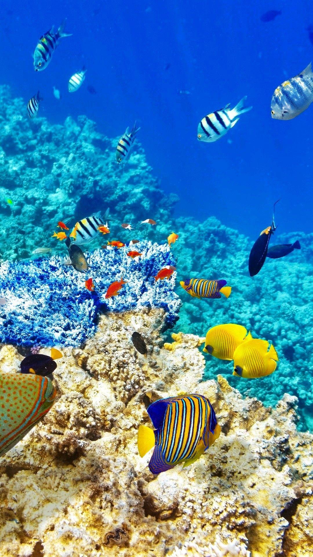 Fish Wallpaper Underwater Wallpaper Ocean Creatures Animals