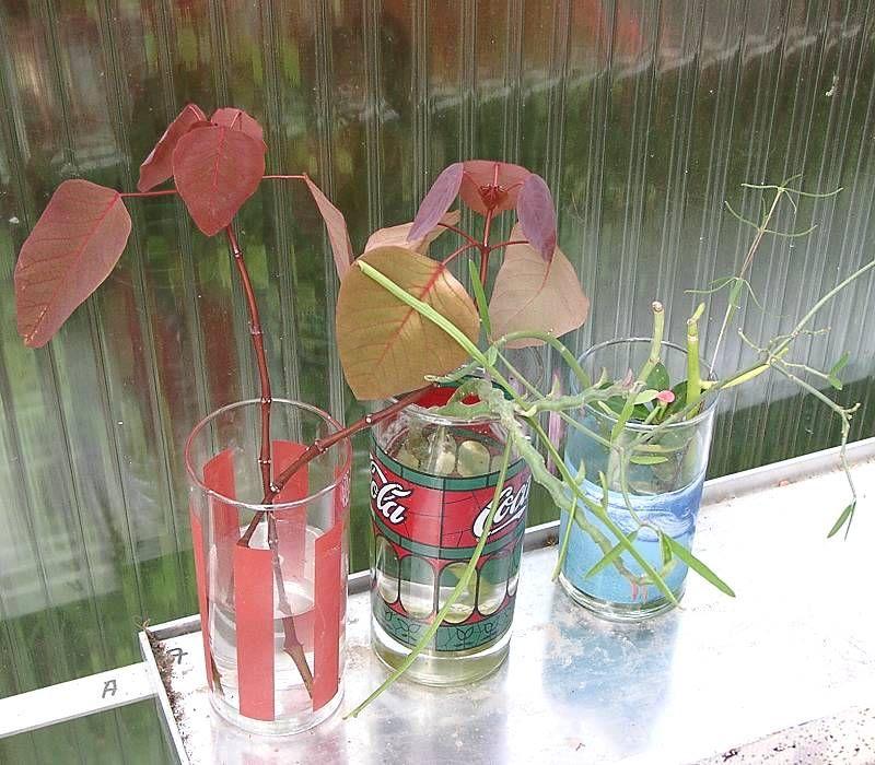 Photo of International Euphorbia Society