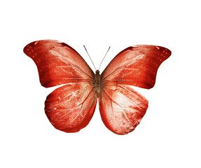 Color butterfly , isolated on white background , #Sponsored, #butterfly, #Color, #isolated, #background, #white #Ad