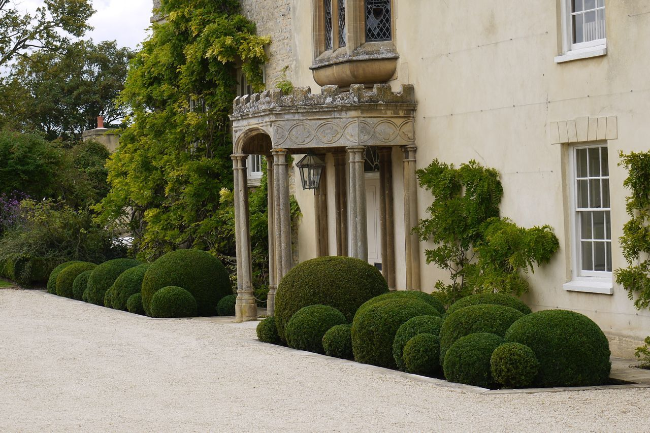 cloud pruned box jake hobson cloud pruning and organic topiary from. Black Bedroom Furniture Sets. Home Design Ideas
