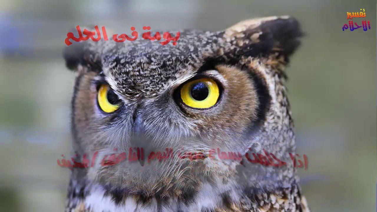 معنى بومة فى الحلم تفسير احلام Owl Spirit Animal Spirit Animal Meaning Animal Spirit Guides