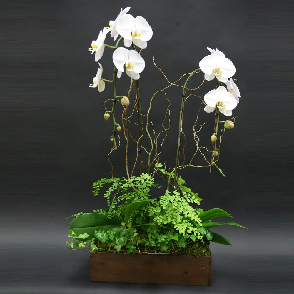 Live Orchid Box With Ferns Ivy By Jacob Maarse Florists Indoor Plants Plants Hanging Plants Indoor