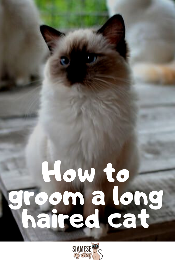 How To Groom A Long Haired Cat Long Haired Cats Long Hair Cat Breeds Long Hair Styles