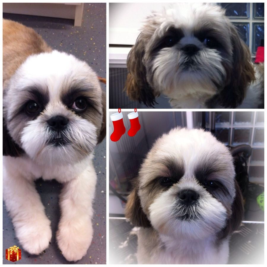 Pin By Brenda Dunham On Pampered Pets Pamper Pets Dog Grooming