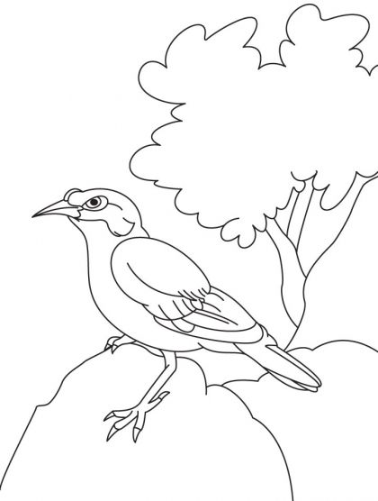 Common Indian Myna Sitting On The Rock Coloring Page