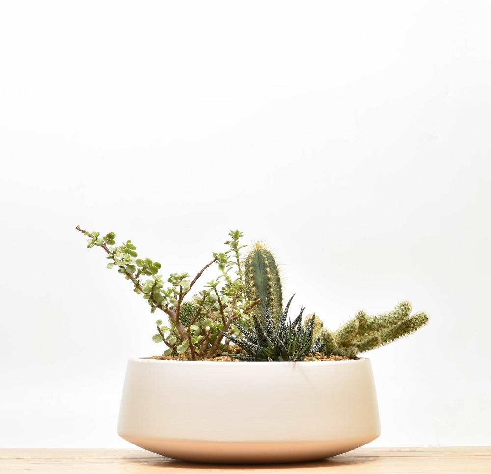 Succulent Centerpiece Succulent Bowl Tabletop Succulent Planter Ceramic Succulent Bowl Ceramic Pot Modern Planter Succulent Planter