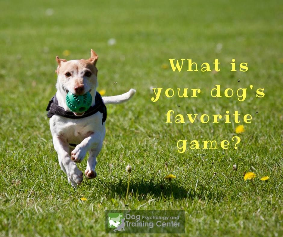 Pin By Sarah Brown On What S Your Dog S Favorite Game To Play