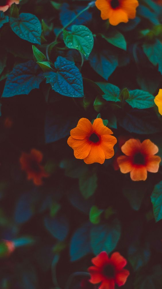 Oblivion Flowers Photography Wallpaper Iphone Wallpaper Vintage Photography Wallpaper