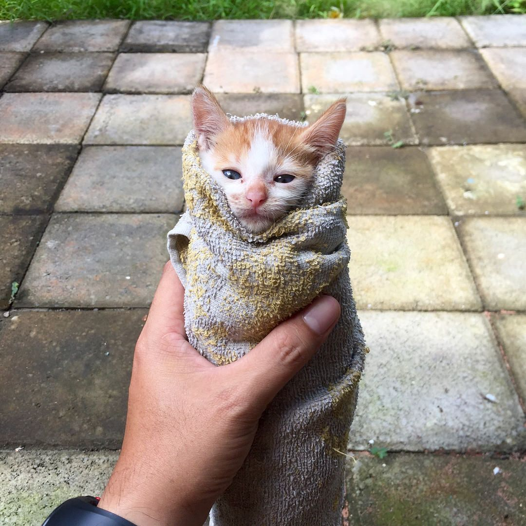 Kitten Wrapped In A Towel Kittens Cutest Cute Animals Cute Cats