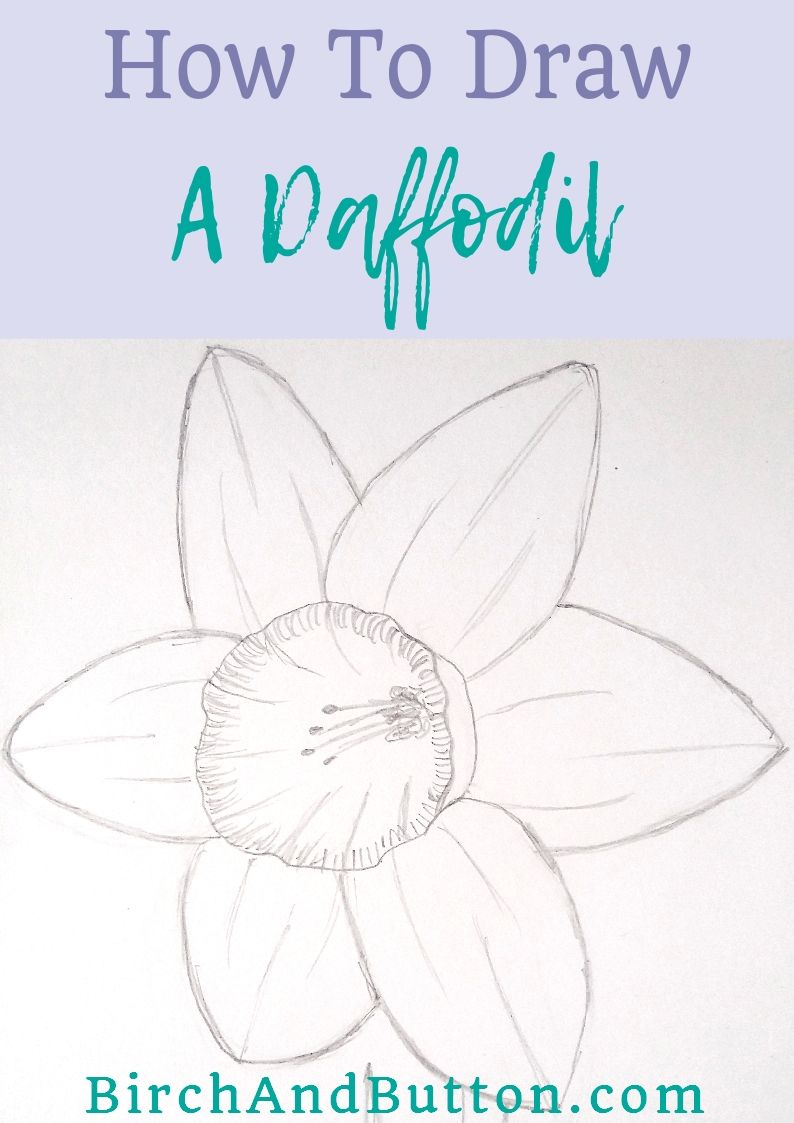 How to draw a daffodil learn to draw pinterest manualidades