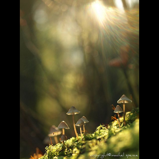 Light And Mushrooms Close If Photography Is The Best