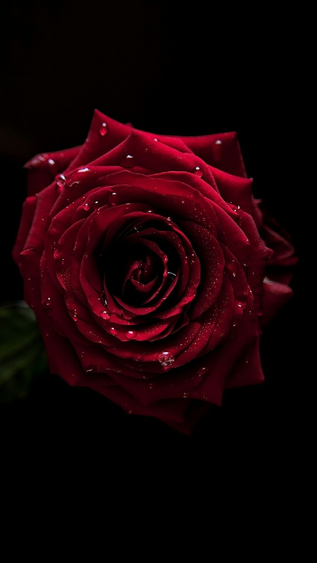 Beautiful Morning My Love Flowers Black Background Rose