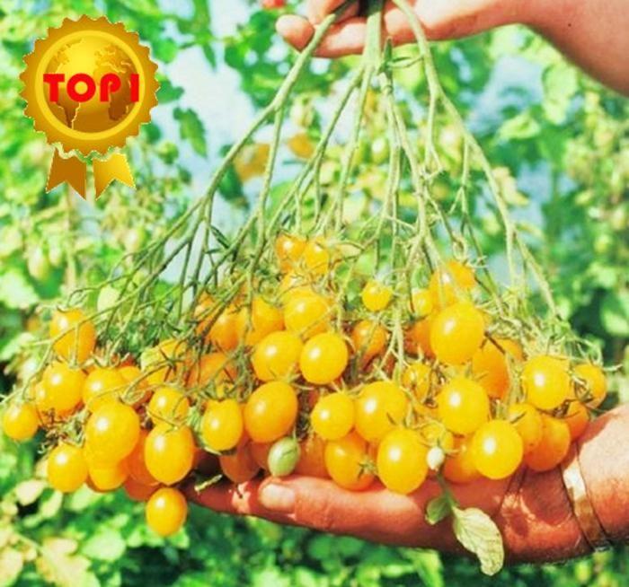 Hot Sale 300Pcs Chinese Cherry Tomato Seed Mini Yellow 400 x 300