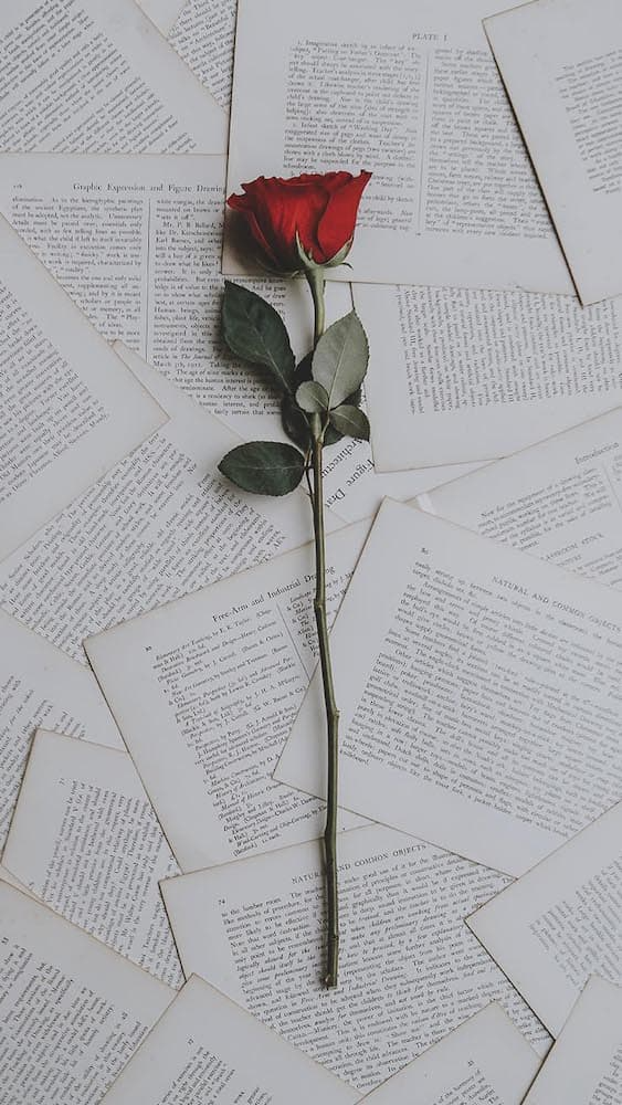 خلفيات ورد للايفون Wallpaper Iphone Roses Preppy Wallpaper Rose Wallpaper