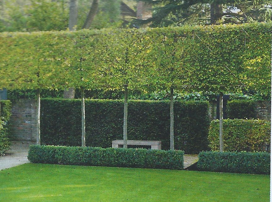 pleached hornbeam hedge garden by charlotte rowe part of a photo by margaret majerus. Black Bedroom Furniture Sets. Home Design Ideas