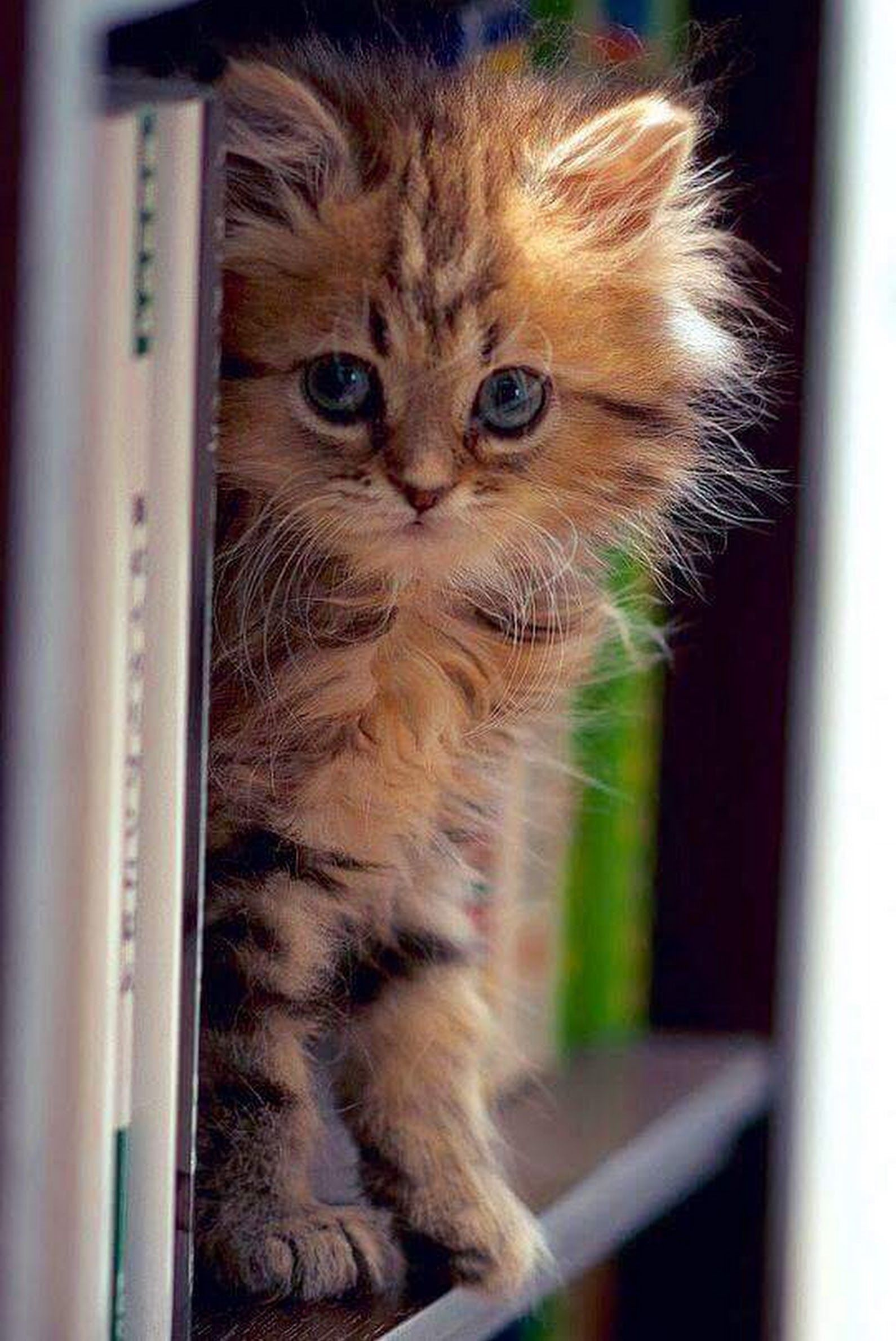 littersolutionscat my cat litter channel is almost here finally ahhhhhhhh pls join me kittens cutest pretty cats cute cats pinterest