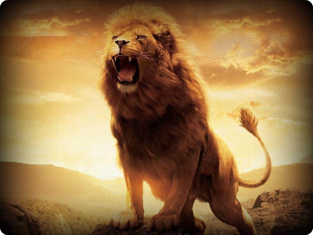 der l we br llt l we lion pictures lion wallpaper und. Black Bedroom Furniture Sets. Home Design Ideas