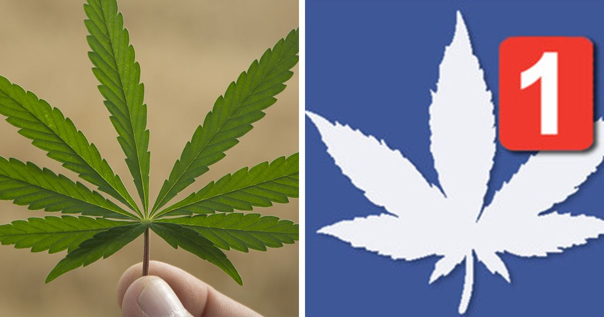 #Marijuana These 'Social Weedia' Companies Are Catering to Marijuana Lovers.It's a whole new world for weed users.