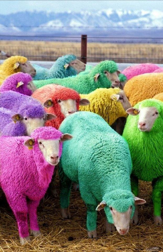 Kleurige schaapjes