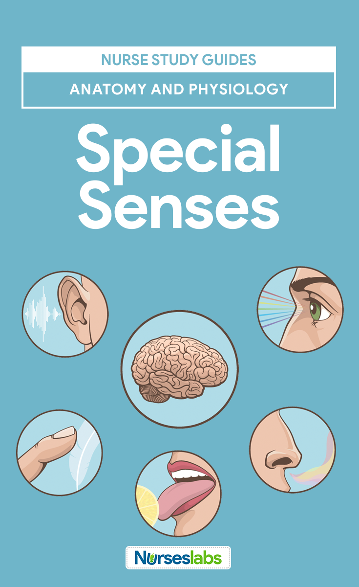 Special Senses Anatomy and Physiology | Pinterest | Nursing notes ...