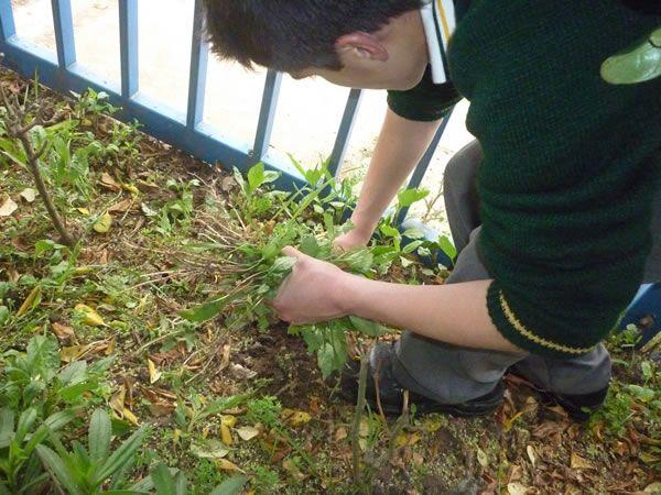 C mo podemos combatir las malezas en el jard n jard n for Como combatir las garrapatas en el jardin