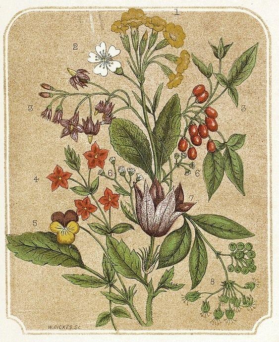Vintage flowers illustration. Botanical illustration