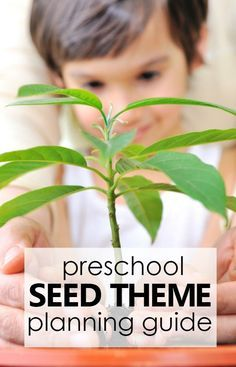 Photo of Preschool Seed Theme Activities – Fantastic Fun & Learning
