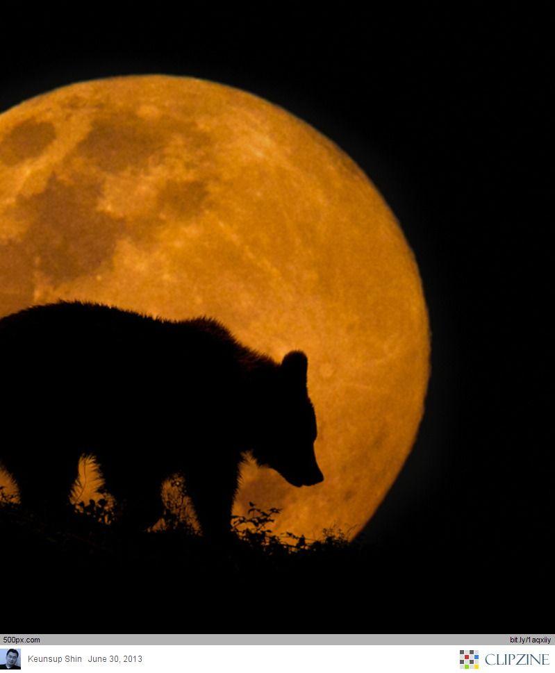 Moon and Bear.