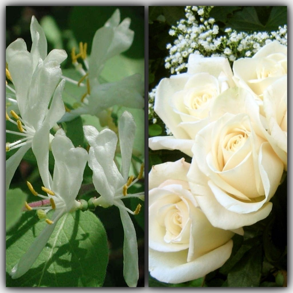 June birth month flowers the family birth month flowers and stone june birth month flowers izmirmasajfo