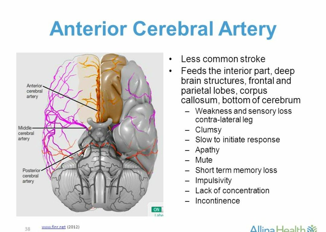 hight resolution of aca cva cheat sheets cheating brain the brain