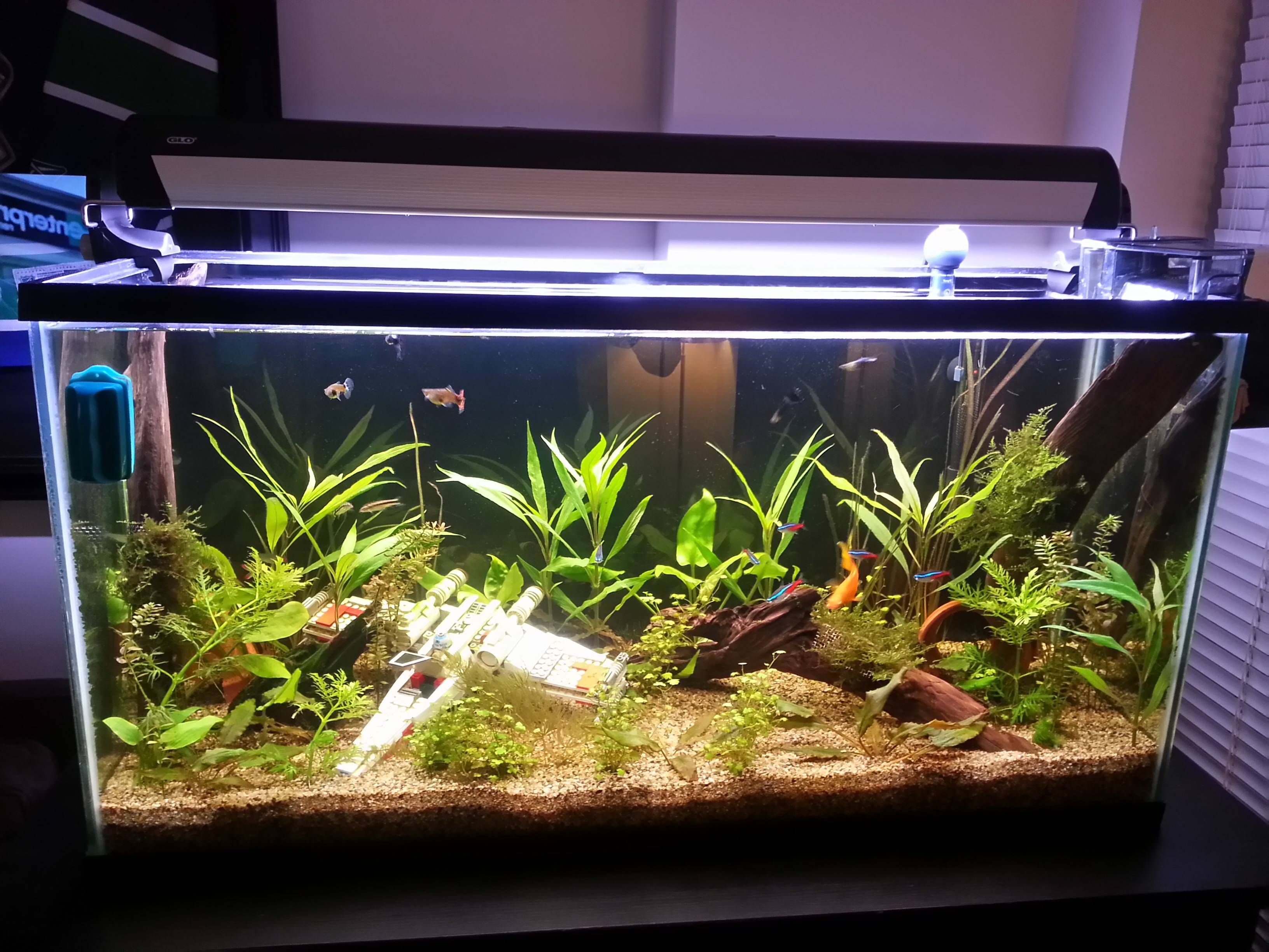 Fish tank ensemble - Desktop Dagobah Aquarium