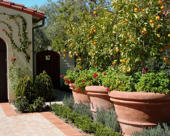 pot the blueberries with a trellis behind for a vine  then plant in the flower bed around the